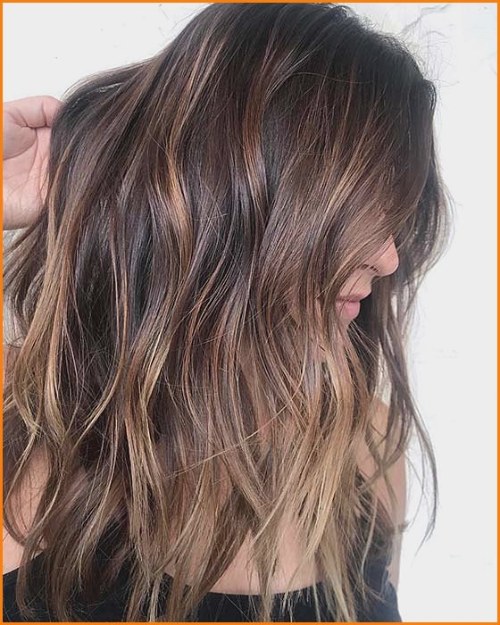 Brown and Chestnut Highlights
